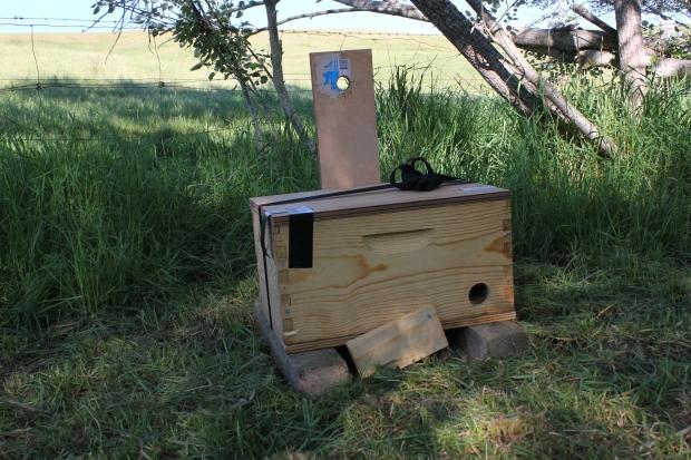 Hive at Humpy Creek