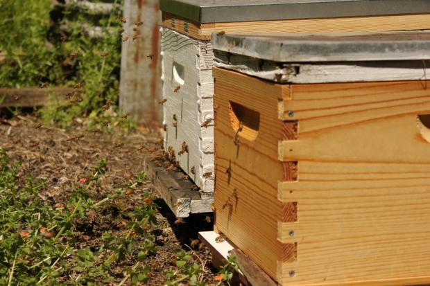 Hives after split