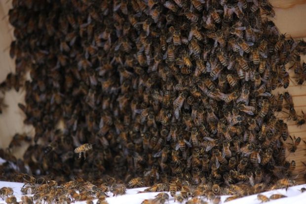 Swarm 7