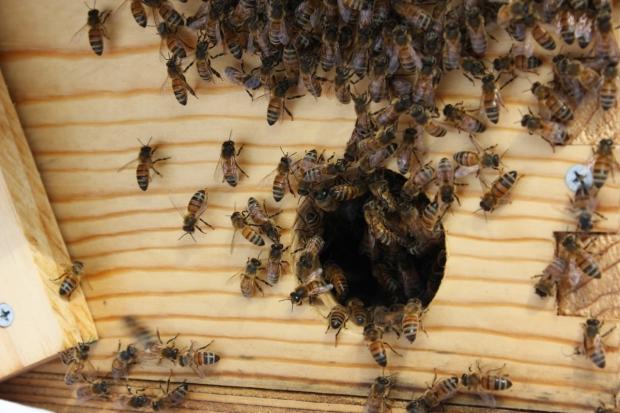 Swarm 9