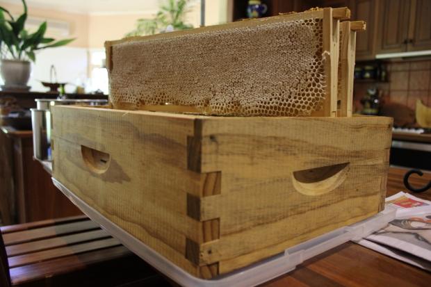 Super full of capped honey