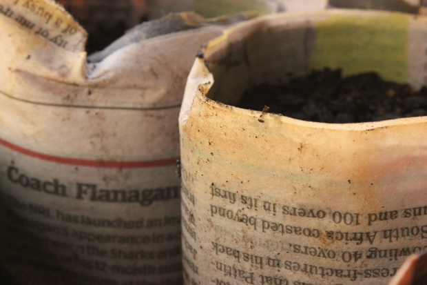Newspaper seedling pots are quick and easy to make, cheap and a great way of recycling old newspapers.
