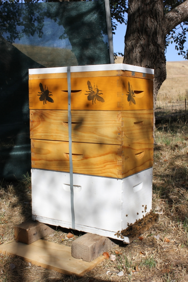 Bee hive heat wave preparation