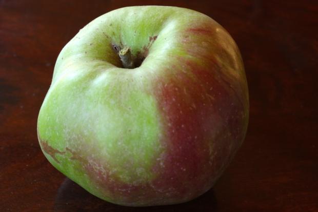 Foraged apple