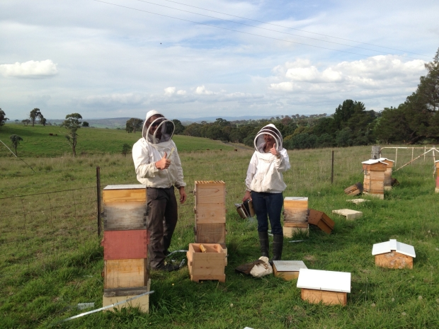 Malfroy's Gold Beekeepers!